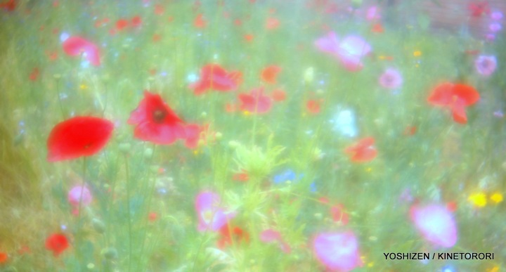 Riot of Flowers(5)A09A1991
