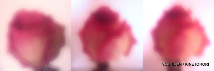 3rd-DD Rose(5)184-001