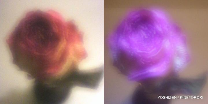 3rd-DD Rose(6)183-001