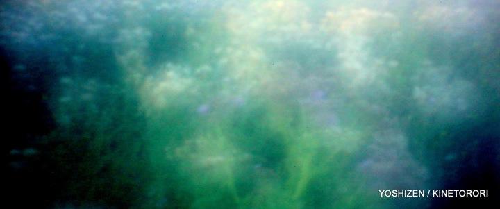 Field by DD-Pinhole(8)A09A2991