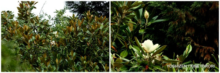 Magnolia at Park(2)185-001