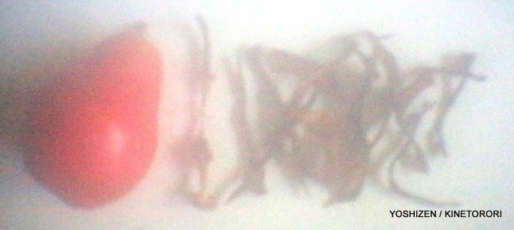 pear Skin(1)-A09A4095