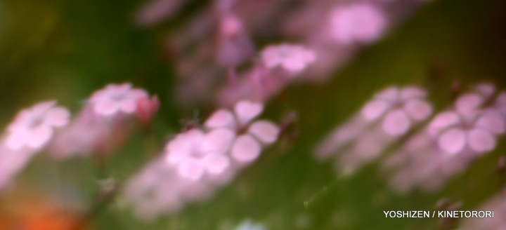 Soft Blur-2-A09A5840-001