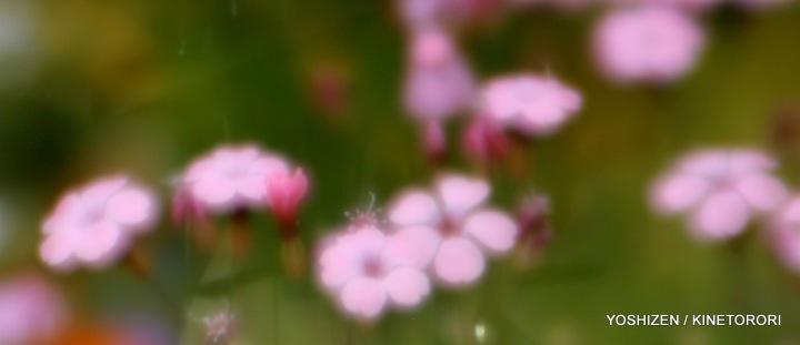Soft Blur-3-A09A5843-001