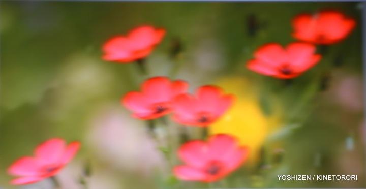 soft Blur-4-A09A5850