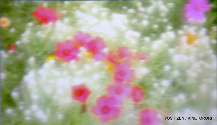 Soft Blur-6-A09A5798