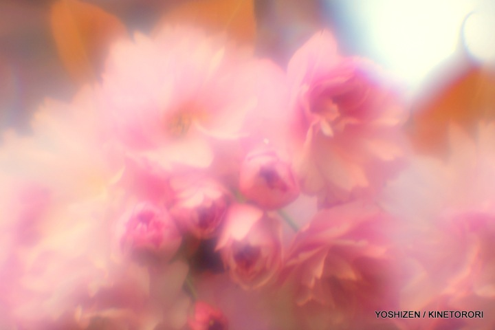Tele-soft Cherry-2-A09A8210