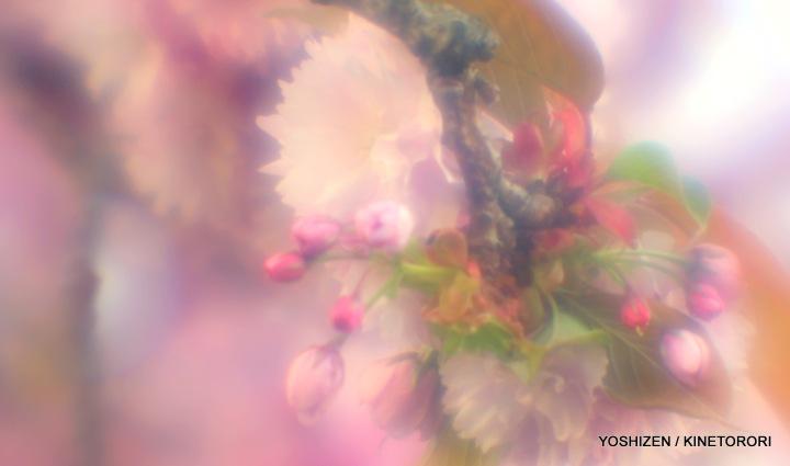 Tele-soft Cherry-5-A09A8196