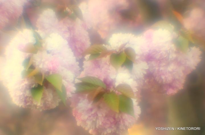 Tele-soft Cherry-7-A09A8220