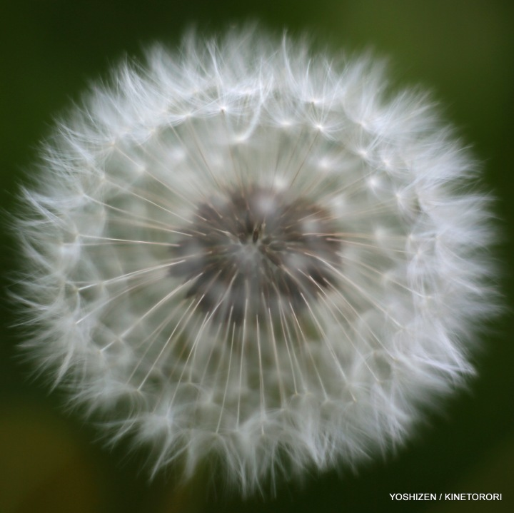 02-Pec'R-F'shift-Flowers-A09A0645