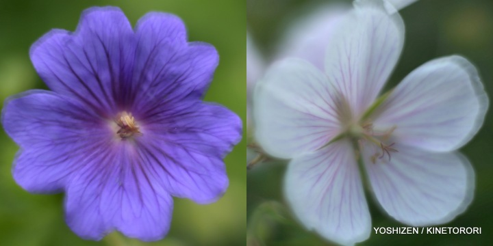 03-Pec'R-F'shift-Flowers x2 Lens1-001