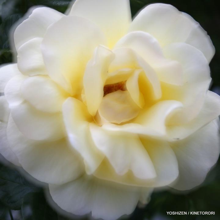 05-Pec'R-F'shift-Flowers-A09A0743