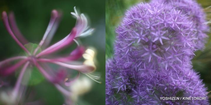 06-Pec'R-F'shift-Flowers x2 Lens2-001