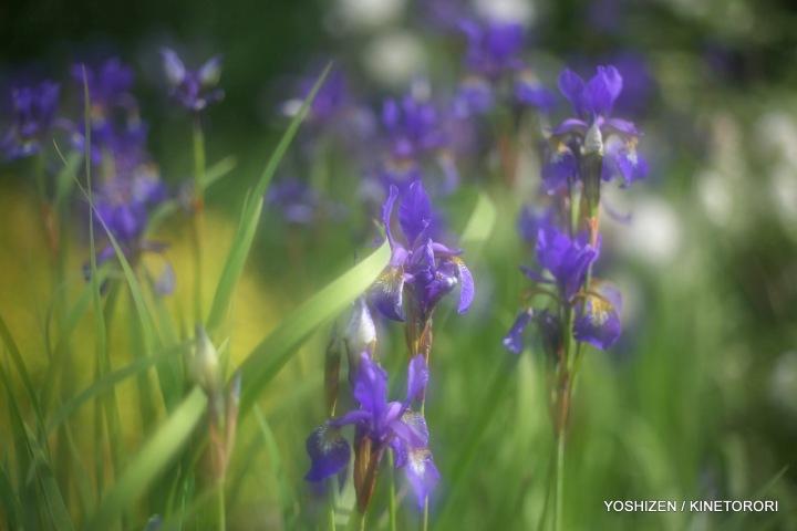 08-Pec'R-F'shift-Flowers-A09A0871