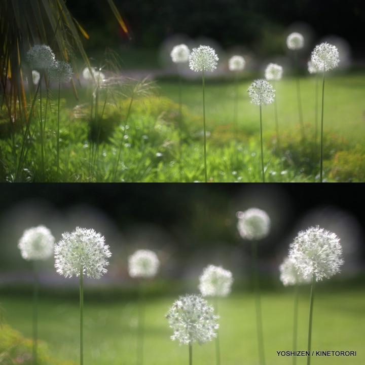 09-Pec'R-F'shift-Flowers x2 Lens-001
