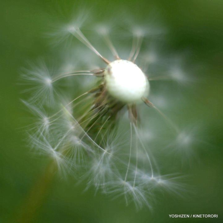 10-Pec'R-F'shift-Flowers-A09A0663