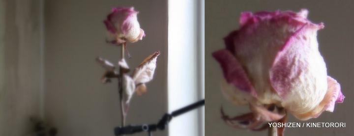 Picasa Soft focus (A)
