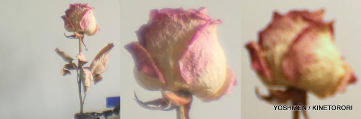 Fancy Lens-14-2-001