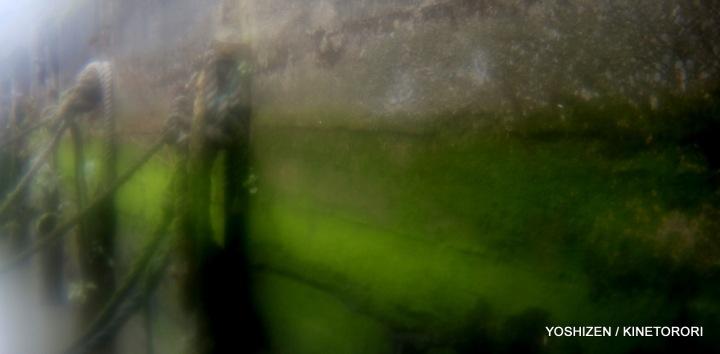 Moss or Algae-1a-A09A2522