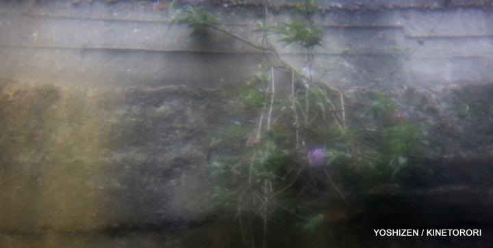 Moss or Algae-2-A09A2525