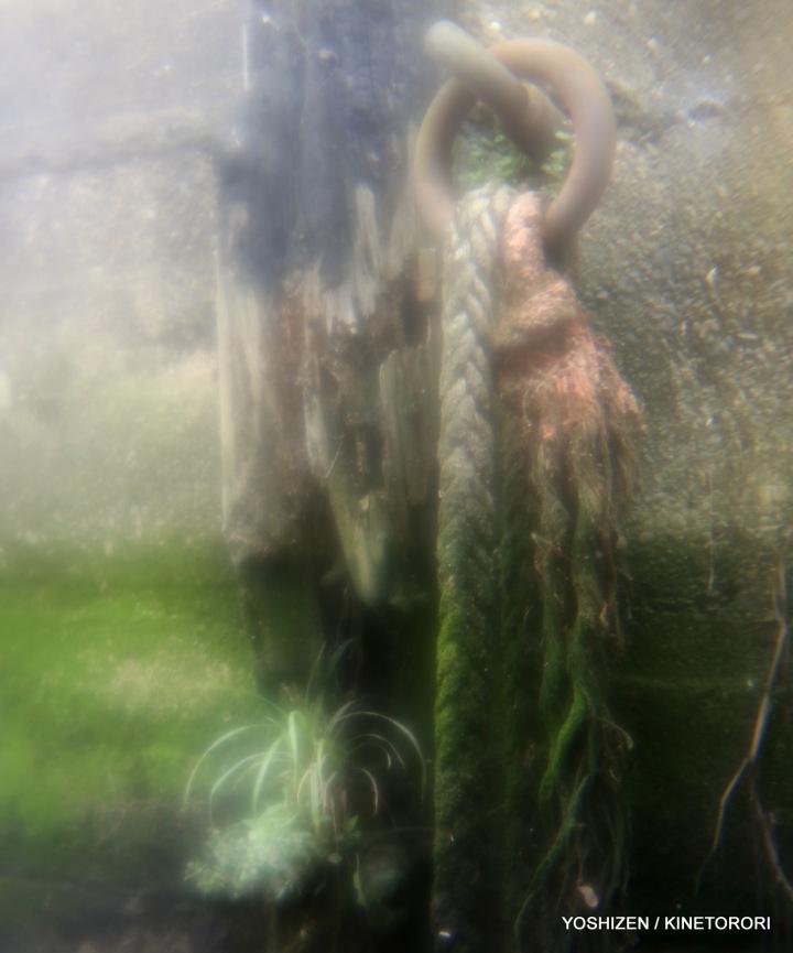 moss or Algae-3-A09A2524