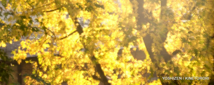 Morning Sun-2-DSC_6301