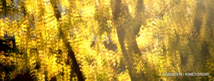 Morning Sun-3-DSC_6294
