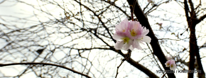 1B-WinterCherry_DSC2341