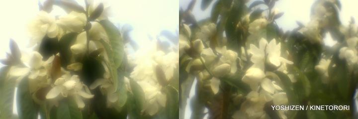 2-E'Magnolia 2016-001