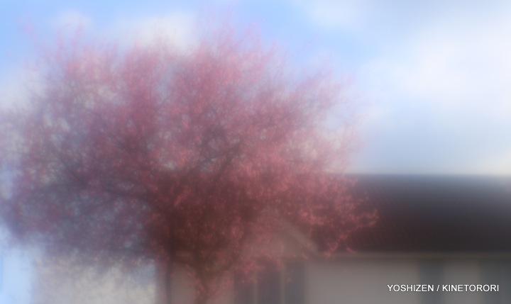 1-Peach flower-A09A4901