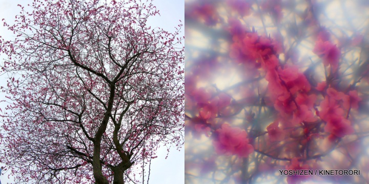2-Peach Flower-001