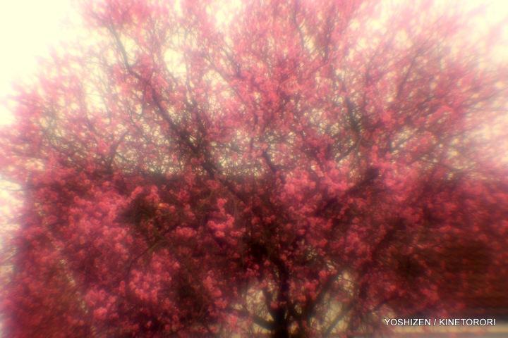 3-Peach Flower-A09A4892