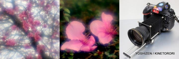 4-Peach Flower1-001