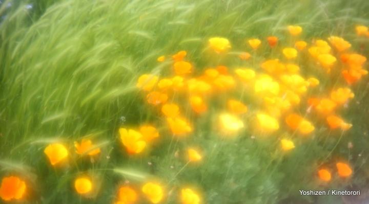2Ele-Meadow-12-A09A5861
