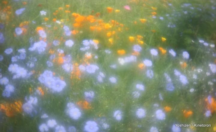 2Ele-Meadow-3-A09A5851
