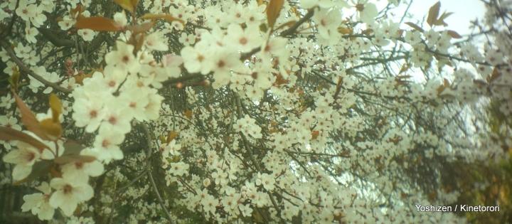 Flower flower(14)-DSC05530