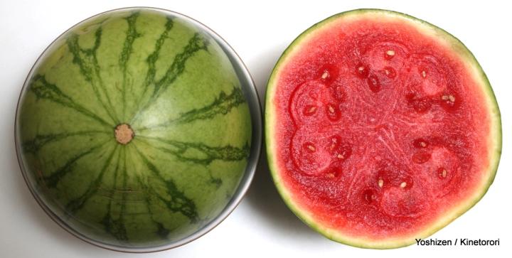 Melon(1)-A09A7566
