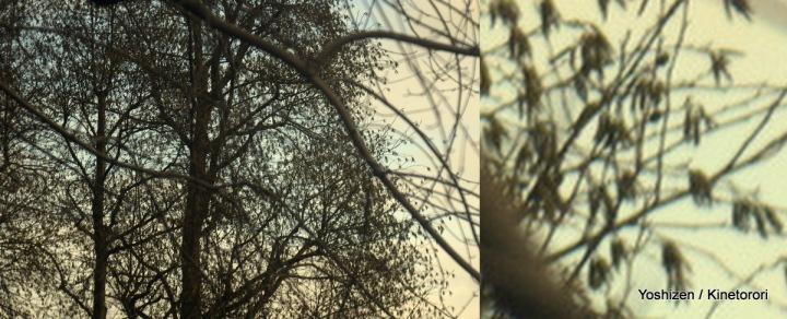 Squirre(4)l-002