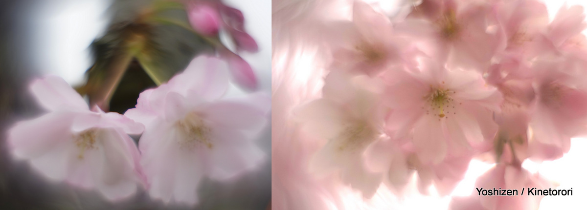 Cherry cherry(xx)-026